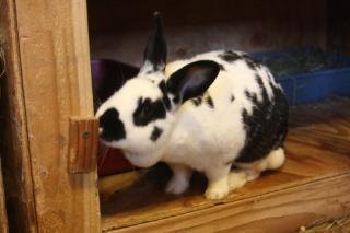 Rabbit rubbin gface