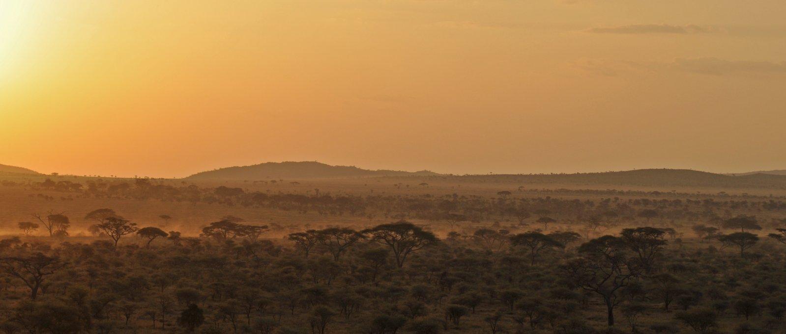 african-woodland