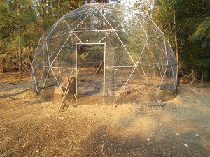 Geodesic dome tortoise habitat
