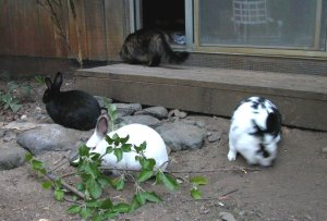Rabbits galore, and a lone cat.