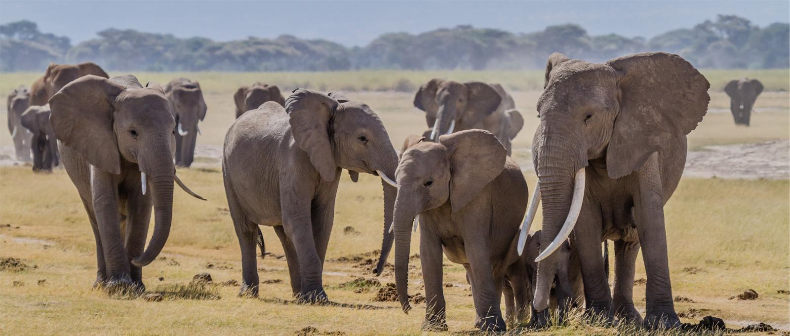 elephant-liberation